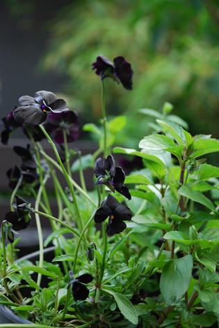 lene ostenfeldt urban garden 2