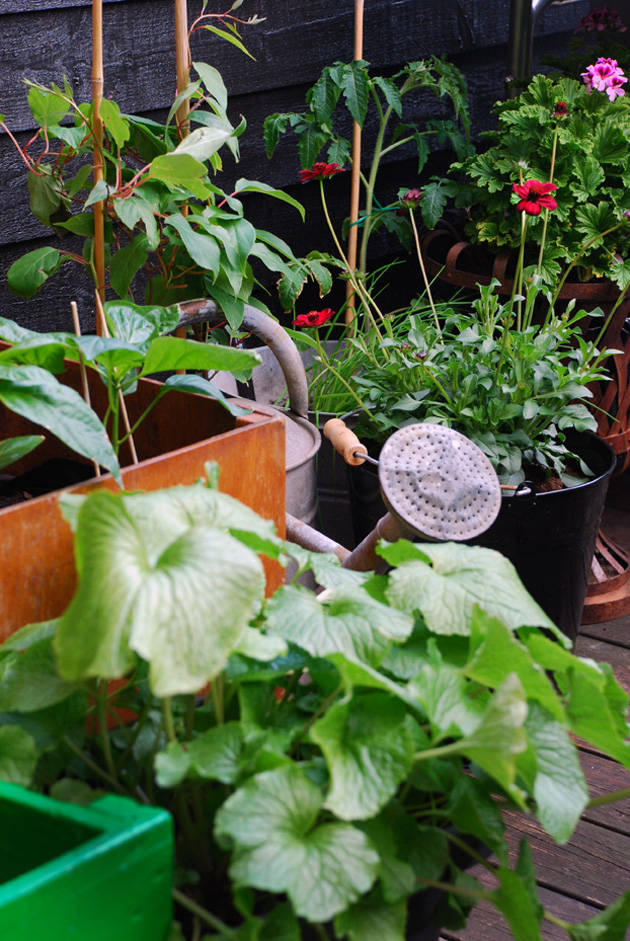 lene ostenfeldt urban garden intro
