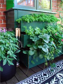 urban garden i kommode ostenfeldt