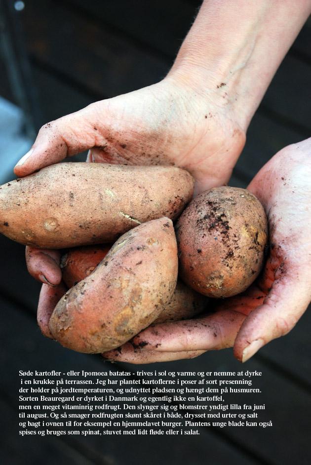 urban garden kartofler ostenfeldt