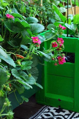 urban garden lene ostenfeldt 11