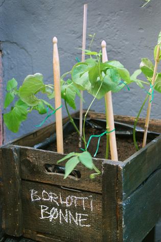 urban garden lene ostenfeldt 32