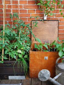 urban garden ostenfeldt 24